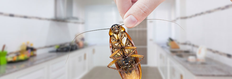 eliminer les insectes nuisibles